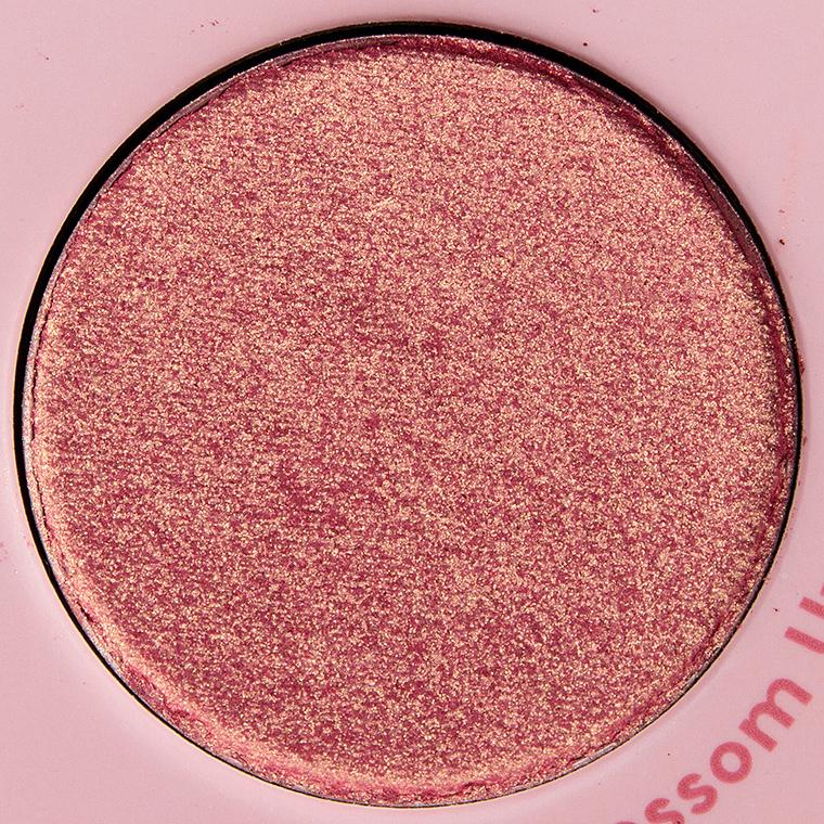 Color Blossom Up pressed powder shadow